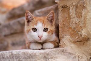 Camouflage Kitten