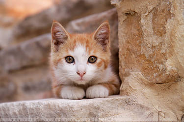 Camouflage Kitten by thrumyeye