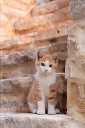 Chameleon Cat by thrumyeye
