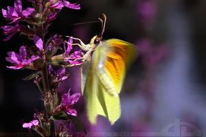 Fluttery. by thrumyeye