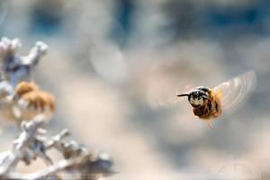 Wasp on a Mission by thrumyeye