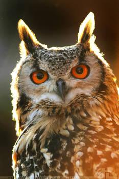 Burnin' owl