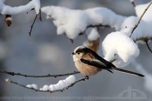 SnowTit by thrumyeye