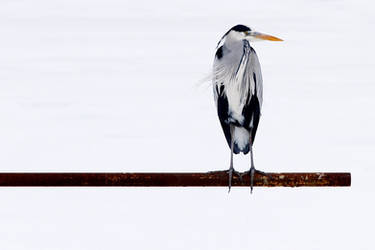The Pole Sitter by thrumyeye