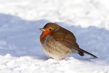 Bird in Ballshape by thrumyeye