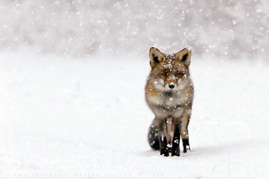 Fox Fantasy by thrumyeye
