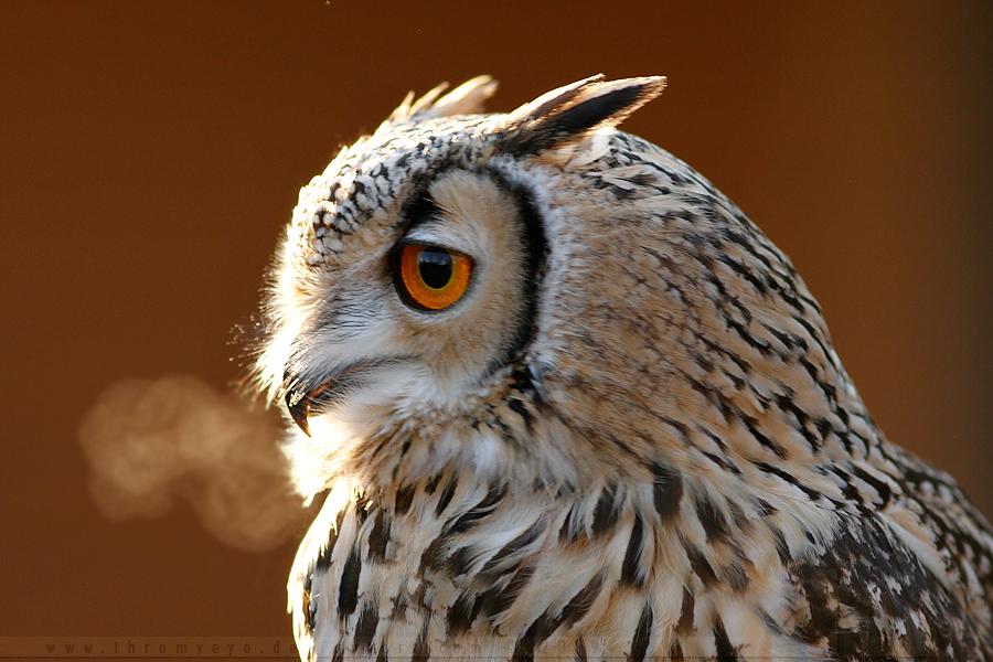 Smoking Owl by thrumyeye