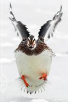 Duck on Ice by thrumyeye