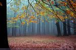 Foggy Forest the Sequel by thrumyeye
