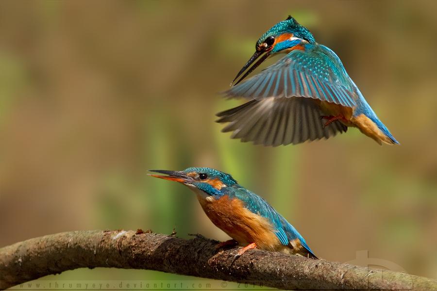 Hovering by thrumyeye