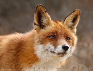 Furry Hope...