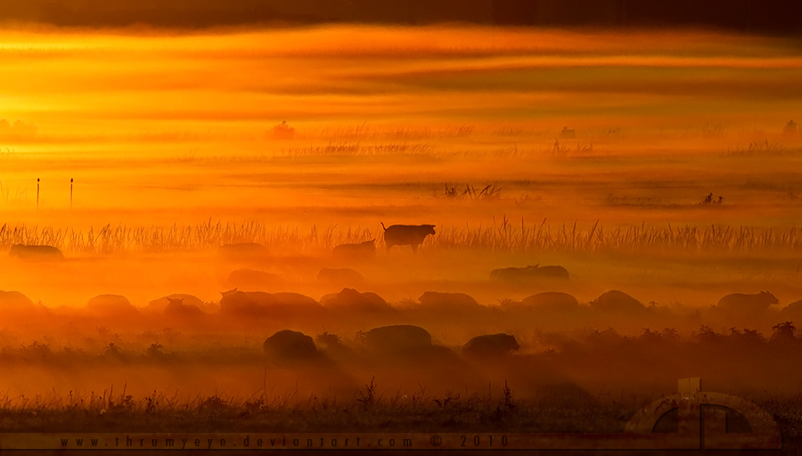 The Black Sheep by thrumyeye