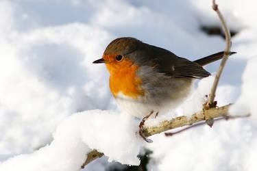 Cold Feathers by thrumyeye