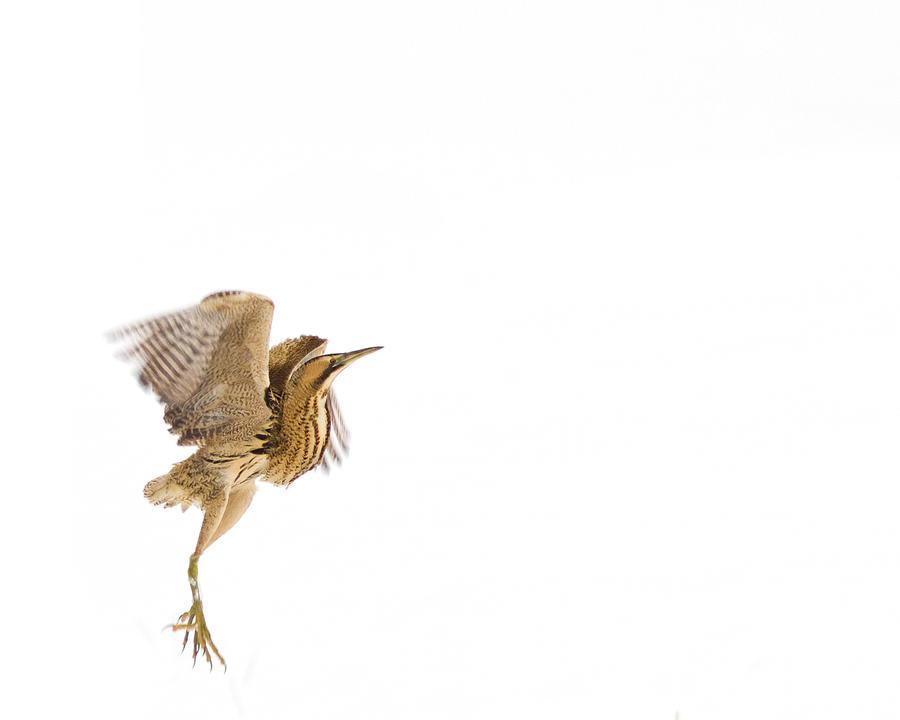 Fly High by thrumyeye