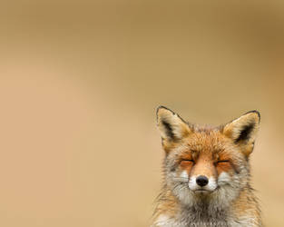 Fox for your Wall by thrumyeye
