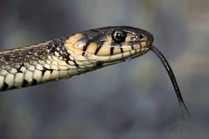 Morning Snake by thrumyeye