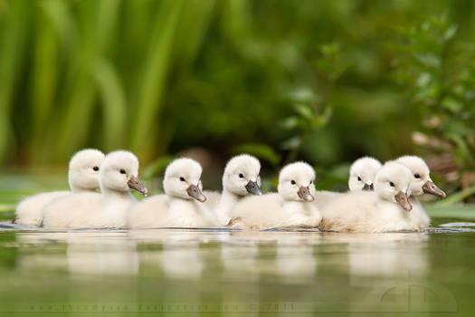We are Family.... by thrumyeye