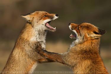 The Disagreement