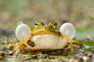 Its a Frogs Life by thrumyeye