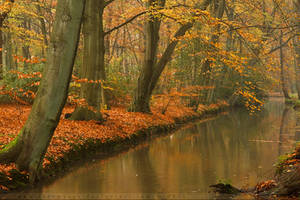 Golden Colors by thrumyeye