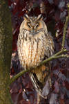 Autumn Owl by thrumyeye