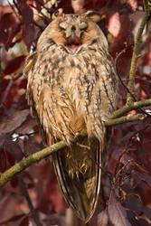 Happy Owl by thrumyeye