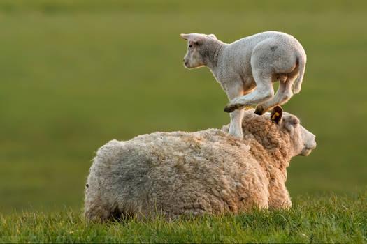 LeapFrogging Lamb