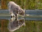 Wet Pussy by thrumyeye
