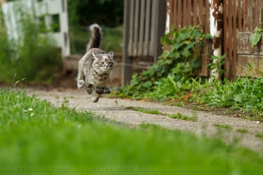 Hi Speed Kitten by thrumyeye