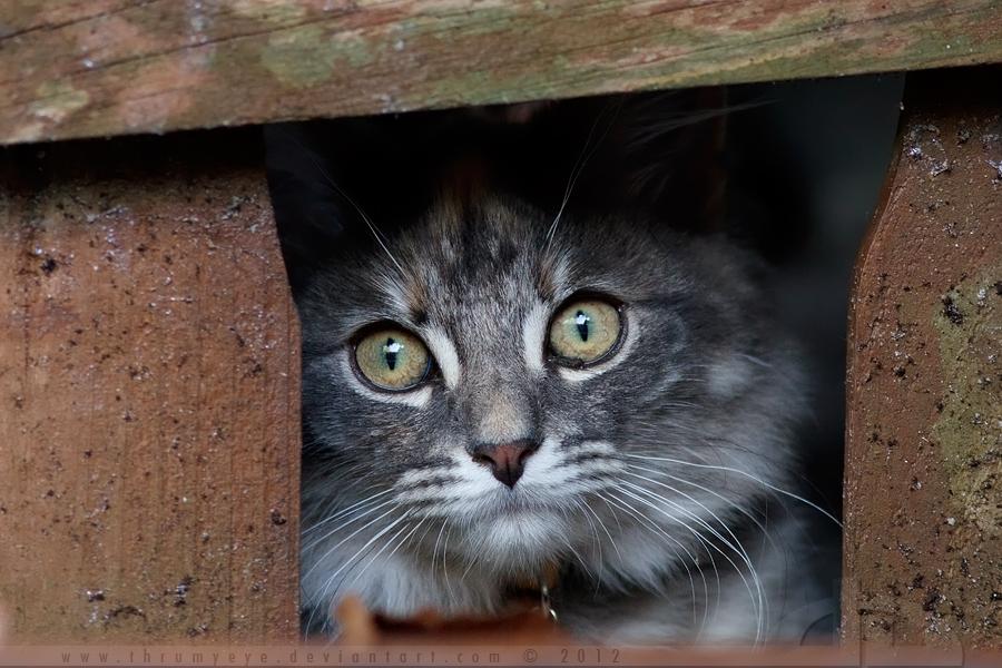 Framed Kitten by thrumyeye