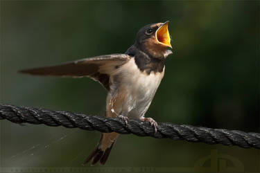 FEED MEEEE! by thrumyeye