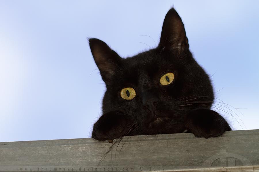 Ceiling Cat by thrumyeye