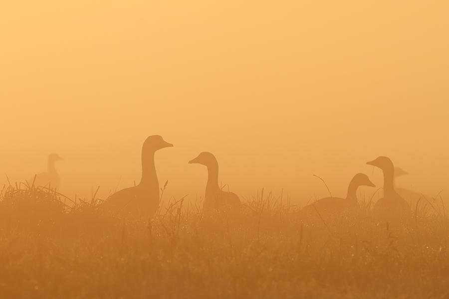 Early Birds by thrumyeye