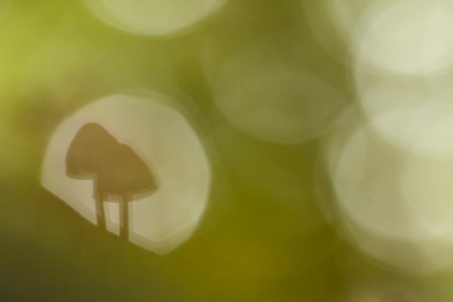 Mushroom Magic by thrumyeye