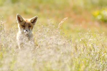 Romantic Fox by thrumyeye