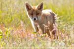 A Fox Summer Bouquet