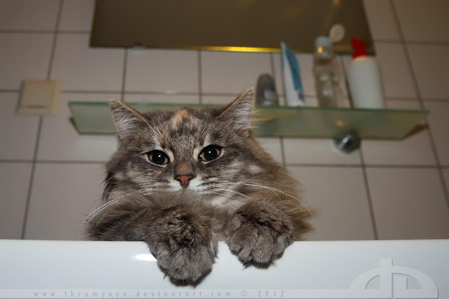 BathroomCat is watching you.... by thrumyeye