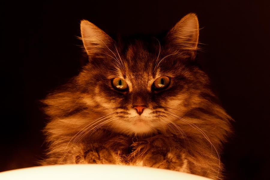 Fortune Teller Cat by thrumyeye