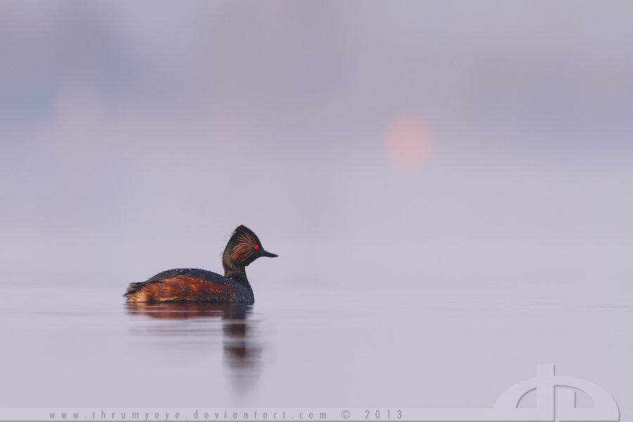 Serenity by thrumyeye