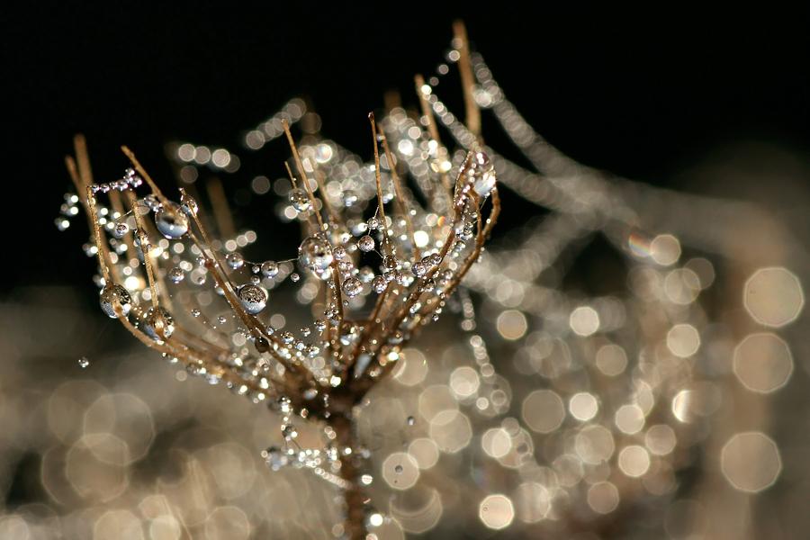 Glimmering by thrumyeye