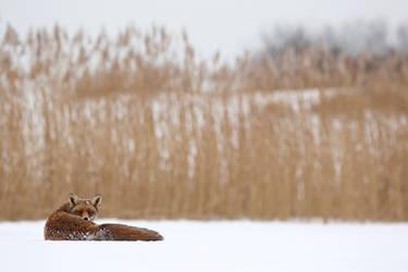 The Watcher in the Reed by thrumyeye