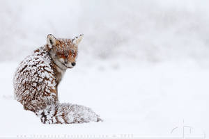 Foxinthesnow by thrumyeye