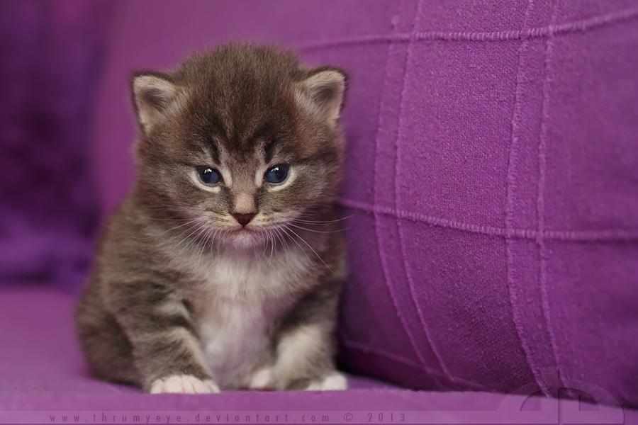 Little Furry Animal by thrumyeye