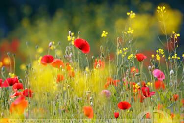 United Colours of Summer by thrumyeye