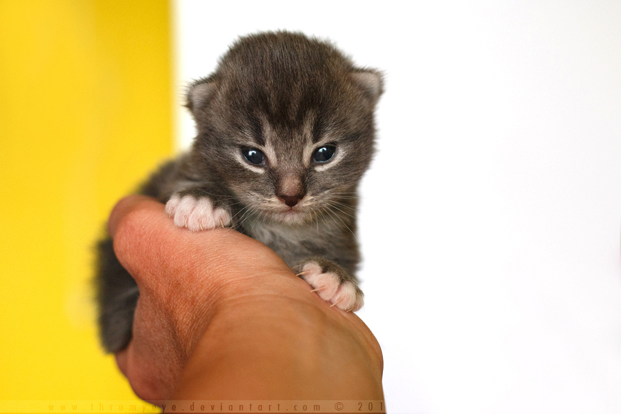 In my Hands by thrumyeye