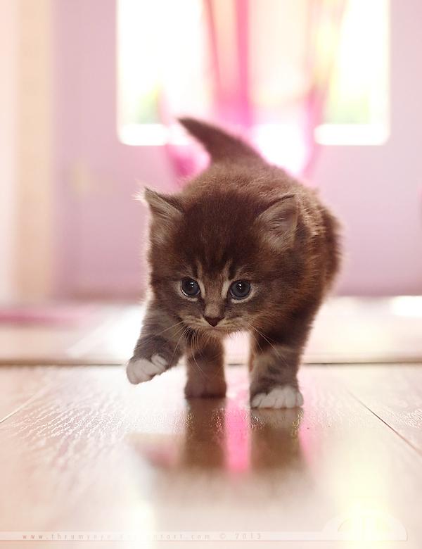 Kitty in Pink by thrumyeye