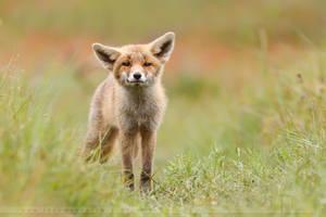 The Fox Kit by thrumyeye