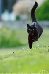 HiSpeed Cat by thrumyeye