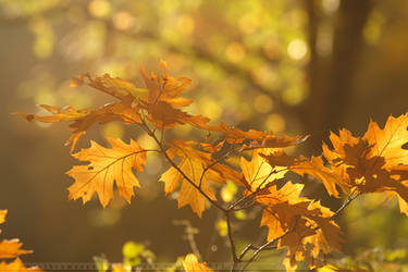 Autumn Mood by thrumyeye