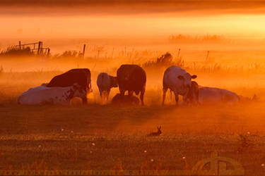 The cows and the hare by thrumyeye